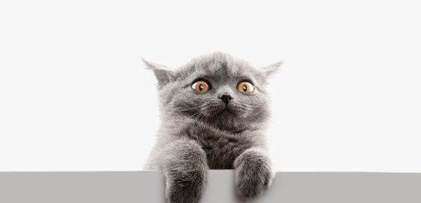 Pisicile vor fi interzise într-un oraș din Noua Zeelandă