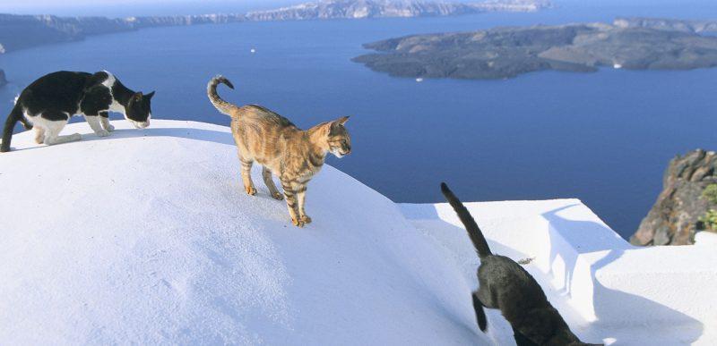 De la dragostea pentru pisici la un job de vis pe o insulă din Grecia