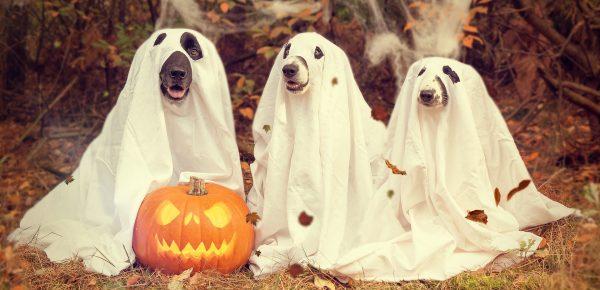 Cele mai trăznite costume de Halloween pentru câini