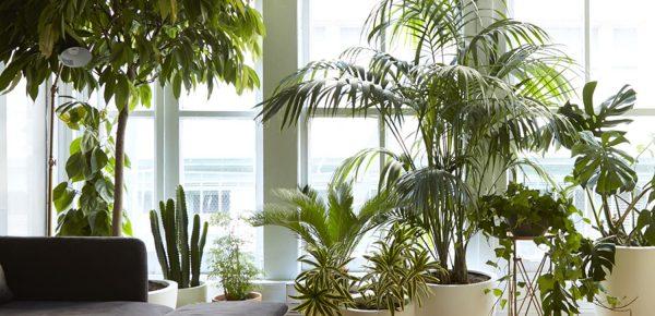 Plante potrivite pentru apartament