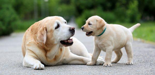 Amenzi uriașe pentru nemții care nu-și plimbă câinele de două ori pe zi