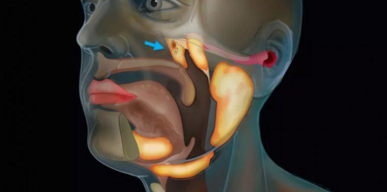 Organ nou din corpul uman, descoperit de cercetătorii olandezi