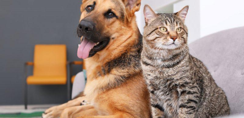 Este necesar acordul vecinilor pentru a avea animale de companie la bloc