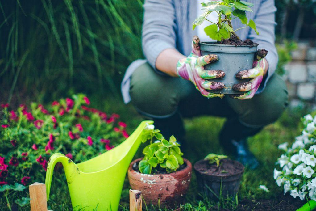 grădinărit hobby