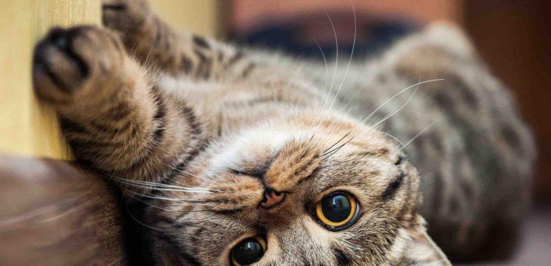 4 lucruri mai puțin cunoscute despre pisici