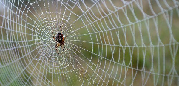 Studiu: Cum sună o pânză de păianjen